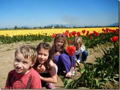 4-17 Tulips 79