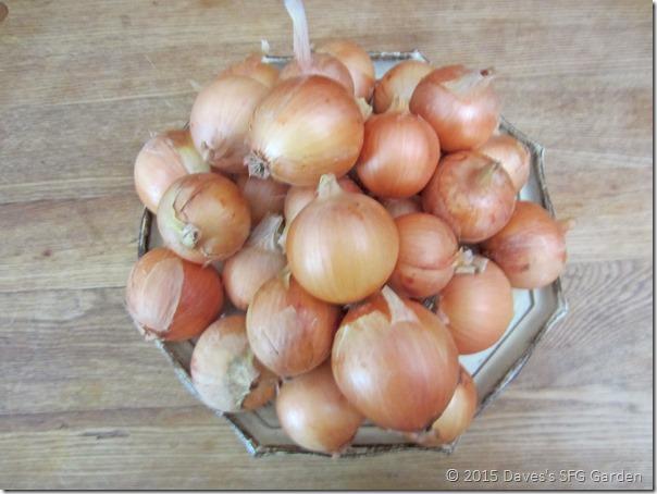 Copra_onions