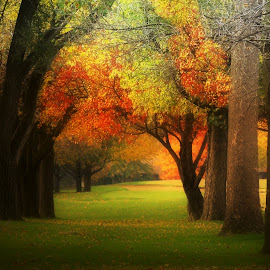 Autumn Tunnel by T Sco - City,  Street & Park  City Parks ( season, nature, park, tree, autumn, fall, leaves, limbs, tunnel )