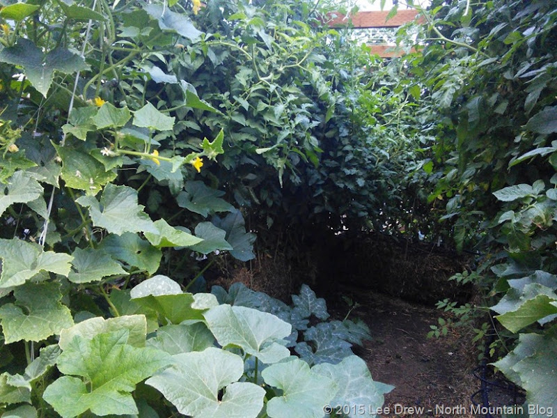 Straw Bale Garden Frame Interior