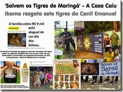 maringa-tigres_thumb[1]