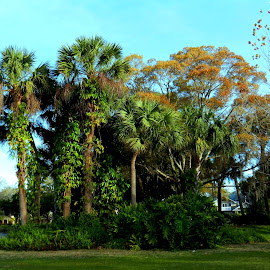 Trees in Park by Kathy Rose Willis - Nature Up Close Trees & Bushes ( flowering, vines, green, palm trees, trees,  )