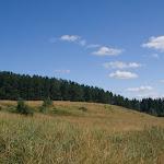 Ausläufer der Taiga / Таёжный лес