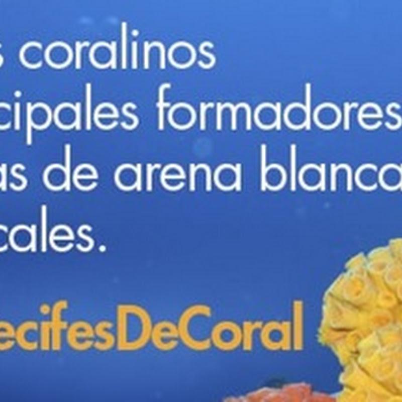 Día Nacional de los Arrecifes de Coral