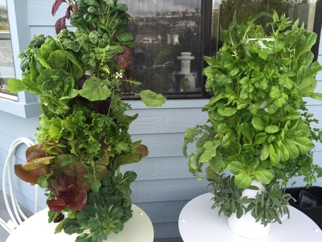 growing organic easy dirt free