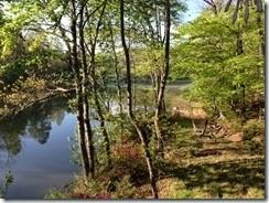 lake, azaleas