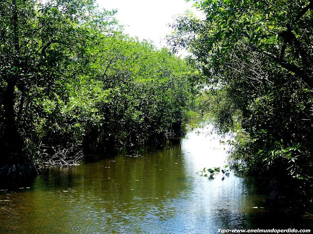 pantanos-everglades.JPG