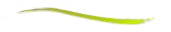 a_divider_by_ucurmi-d587m8c_thumb5_t[1]