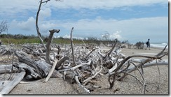 Driftwood forest