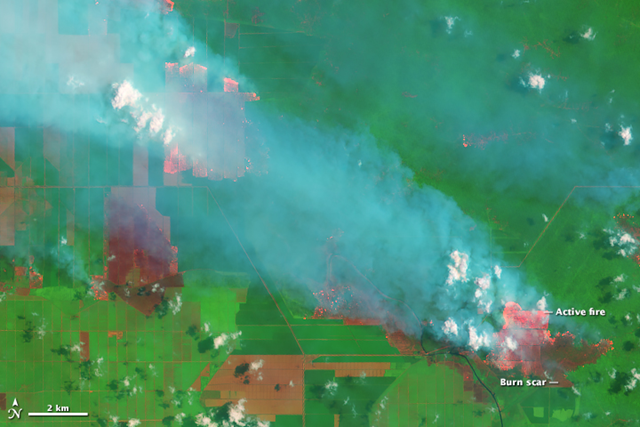 On 5 September 2015, the Operational Land Imager on the Landsat 8 satellite acquired this image of smoke billowing from fires in Jambi Province on the Indonesian island of Sumatra. The fact that the fires burned within well-defined rectangular grids suggests that these were agricultural fires intentionally set by growers. According to land-use maps published by Global Forest Watch, the fires are burning within a palm oil plantation. Photo: Joshua Stevens / NASA / USGS