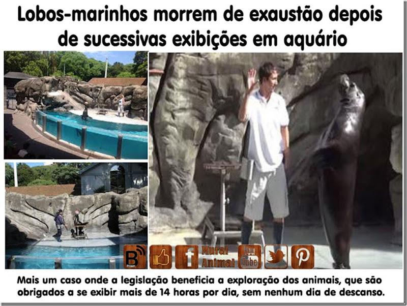 lobos-marinhos_thumb[1]