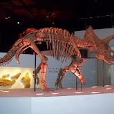 Houston Museum of Natural Science - 116_2672.JPG