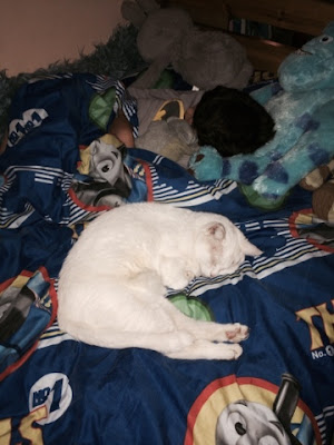 white cat sleeping on big boy's bed with soft toys.
