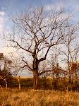 Tree at sunset, Sky Meadows State Park, Virgnia.
