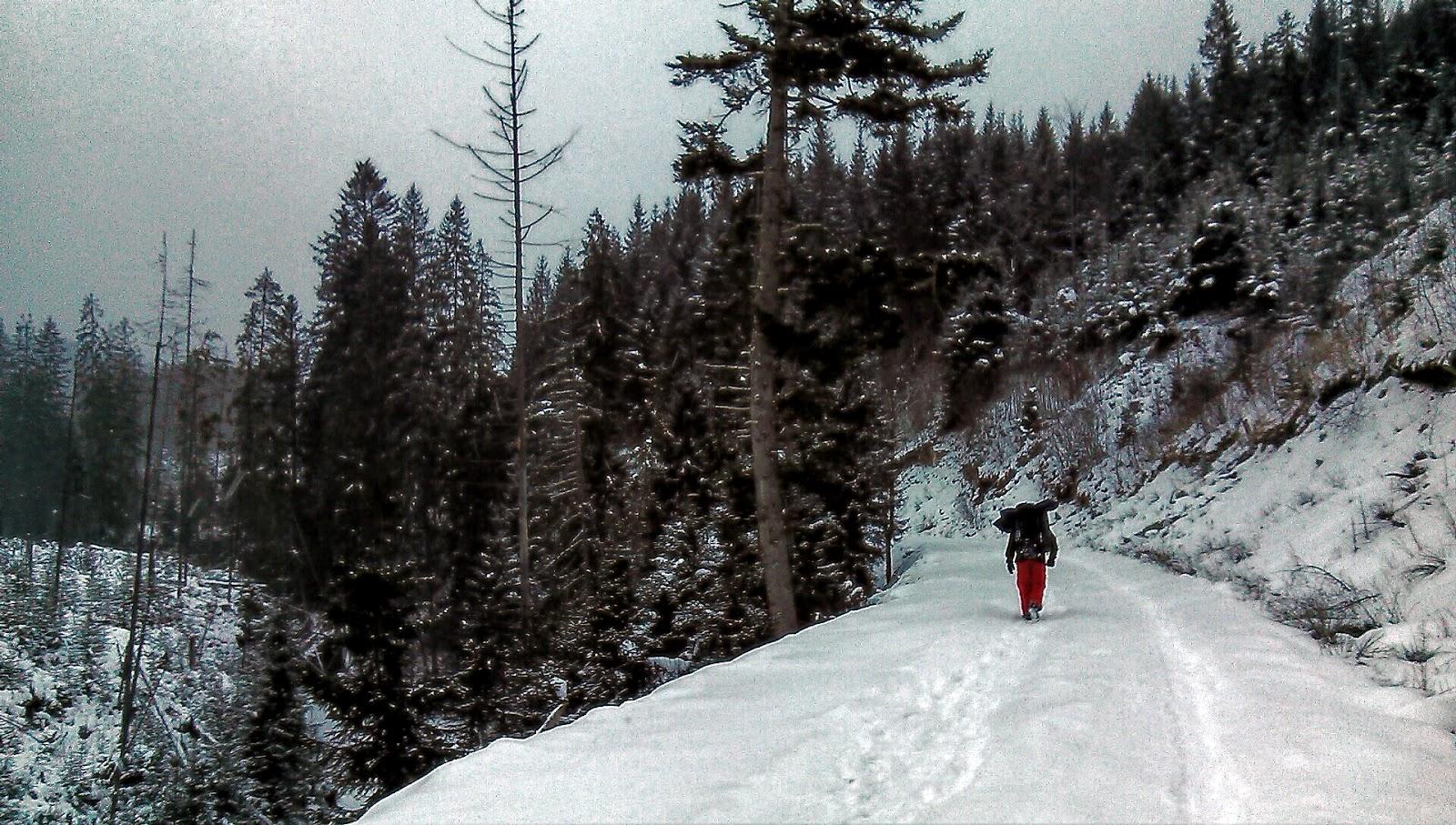 Лісовозна дорога в долині річки мшана