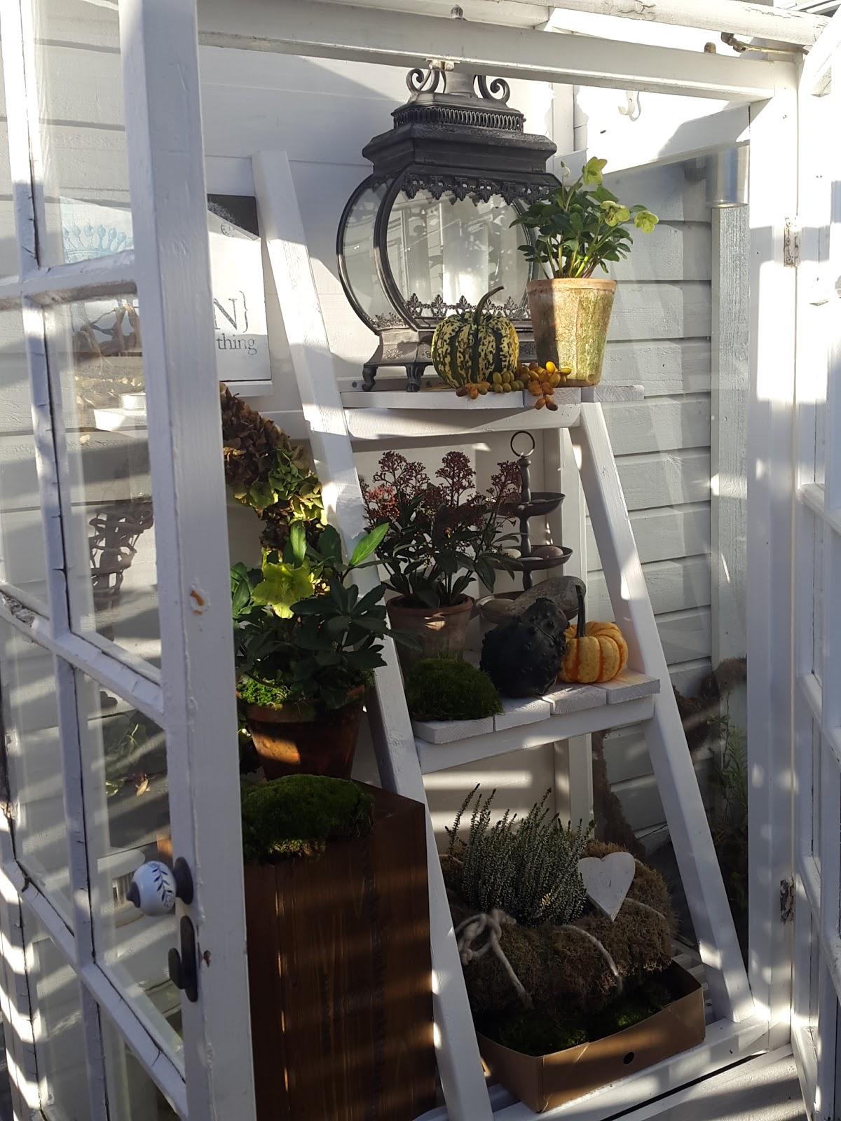 Dorinas blommor : höst på altanen