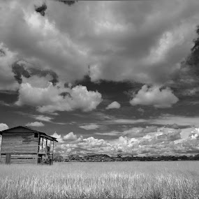 Paddy House by Rashid Mohamad - Landscapes Prairies, Meadows & Fields ( clouds, black and white, paddy, wasan, brunei )
