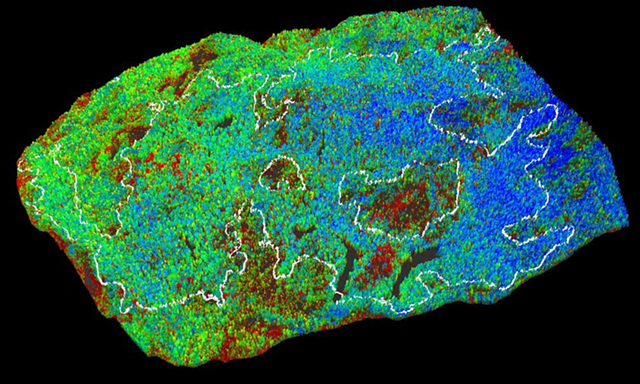 A map of Sequoia National Park's Giant Forest, with blue indicating high water content in the trees, or low drought stress; green indicating moderate water content, or mild drought stress; and red indicating low water content, or high drought stress. Photo: Greg Asner / Carnegie Airborne Observatory