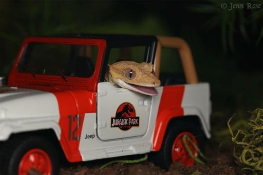 Jurassic Park Lizard via La La La Logan on Twitter