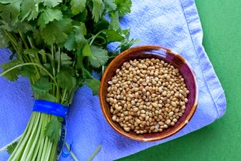 Coriander seeds and cilantro