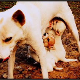 Motherly love by Ankita Bora - Animals - Dogs Puppies (  )