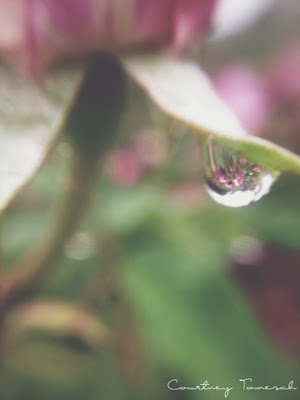 Flower Rain Water Drop Marco