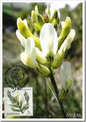 2071_1-00_Astragalus-peterfii