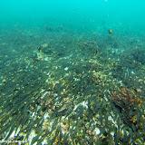 Milhares de peixes - Snorkel no Devil´s Crown - Floreana - Galápagos