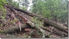 Fallen trees on hill
