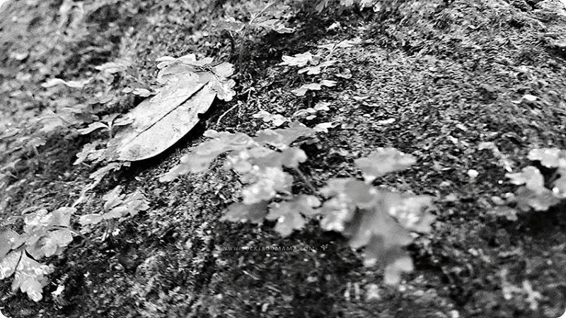 Leaf-(1)