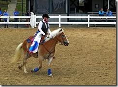 KY horse park 116