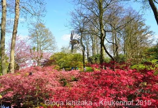 1 .Glória Ishizaka - Keukenhof 2015 - 112