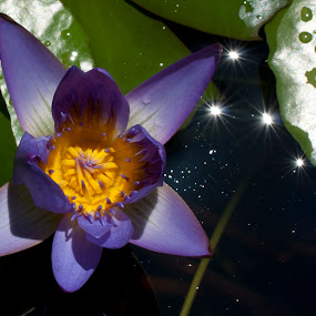 by Jay Kleinrichert - Nature Up Close Flowers - 2011-2013
