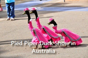 pied-piper-duck-show