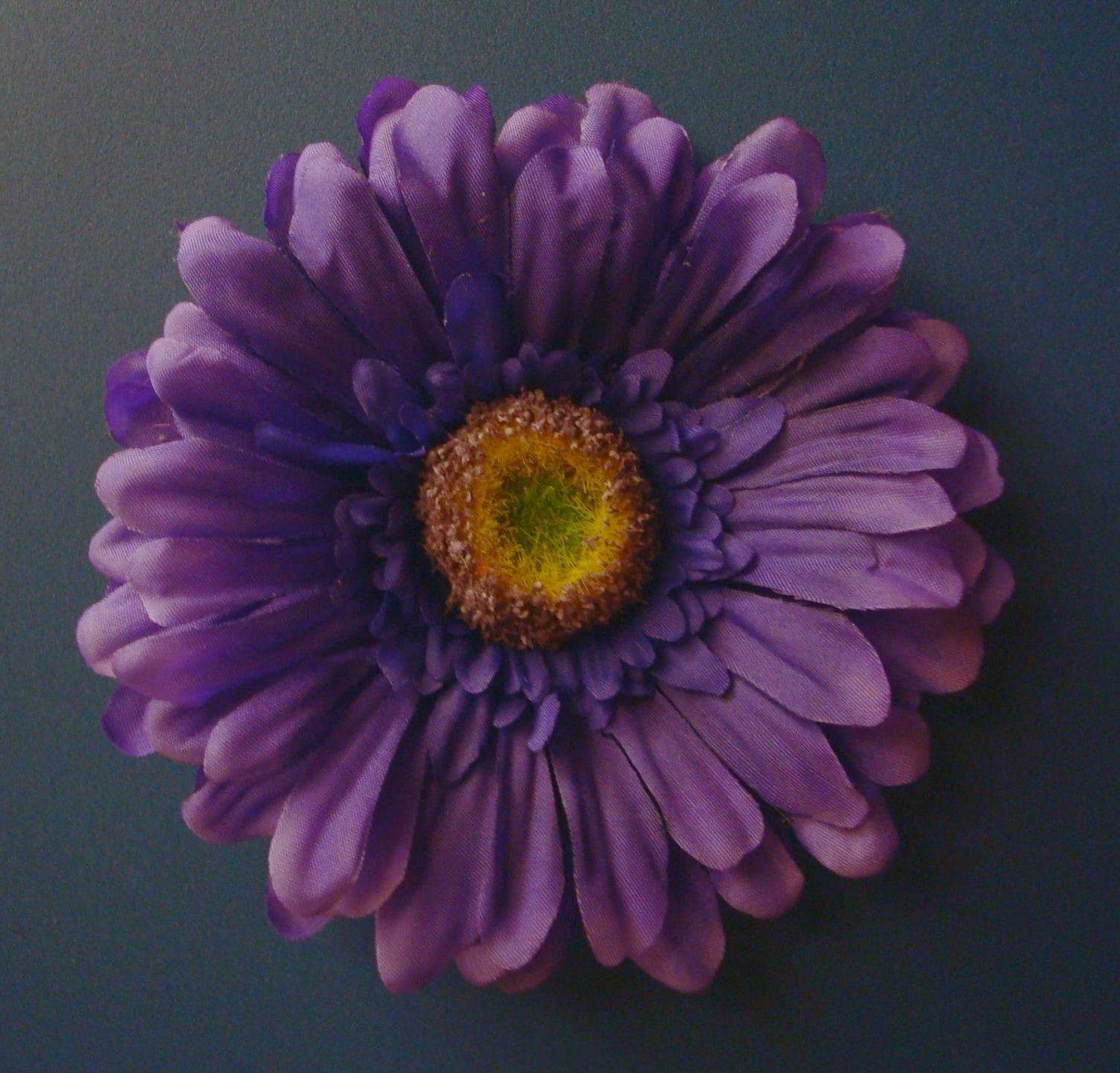 This festive Gerbera daisy