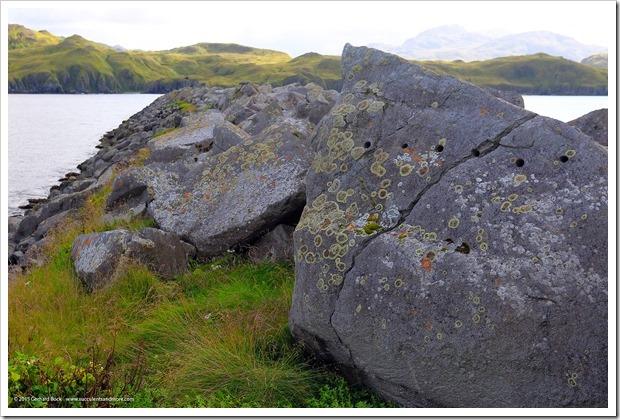 150910_Adak_rocks lichen2_WM