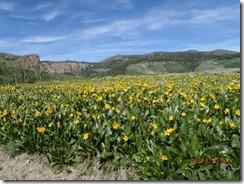 18 Jarbidge Mtn Flowers
