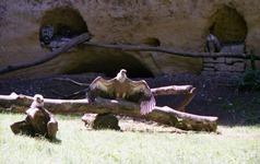 2000.06.08-135.10 vautours