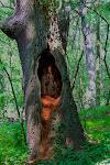 (fast) hohler Baum(da fehlt nur noch die Marienstatue)
