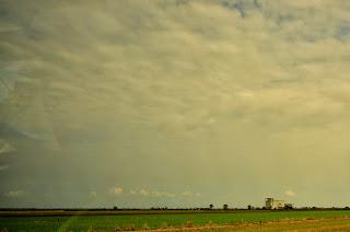 Pola ryżowe i hodowle gniazd, czyli widoczek ze stanu Selangor.
