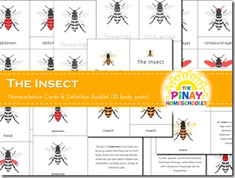Insect 3-part nomenclature cards