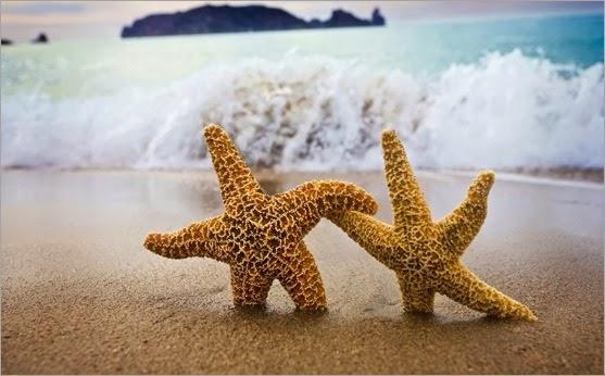 estrellas-de-mar-4351