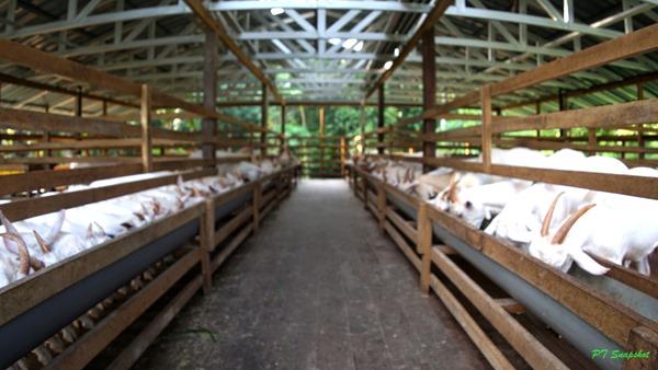 羊儿们开餐了