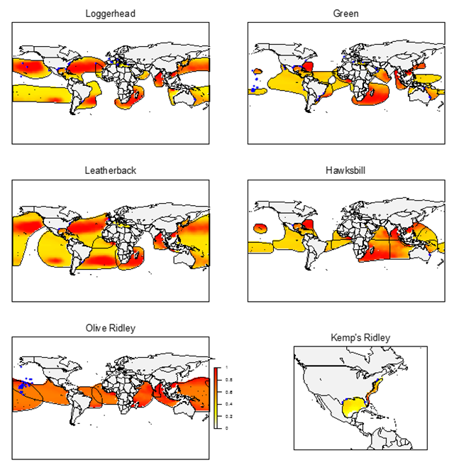 Predicted probability of debris ingestion risk for each sea turtle species (from 0-1). Red indicates a high probability of debris ingestion while lighter colours indicate lower probability of debris ingestion. Blue dots indicate the location of studies used to parameterize the risk model. Graphic: Schuyler, et al., 2015 / Global Change Biology