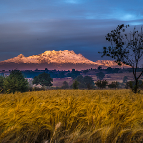 Field and snowy Volcano by Cristobal Garciaferro Rubio - Landscapes Prairies, Meadows & Fields ( sleeping woman, la mujer dormida, volcano, mexico, puebla, iztaccihuatl )
