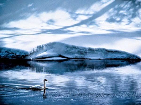 Swan, Wyoming - カバー