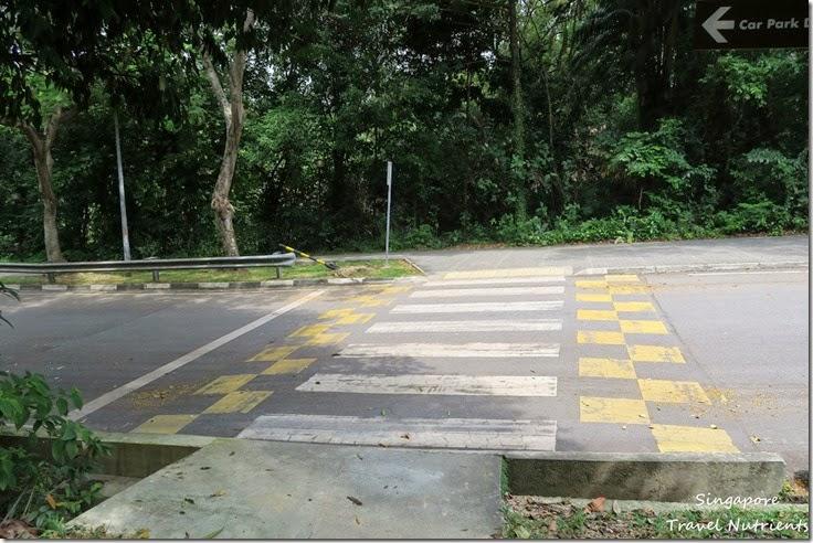 新加坡花柏山 (35)