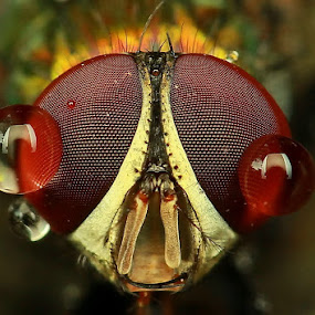I m crying by Agoes Antara - Animals Insects & Spiders