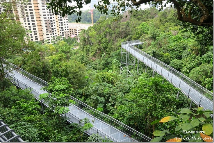 新加坡花柏山 (63)