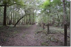 Path along fence-2